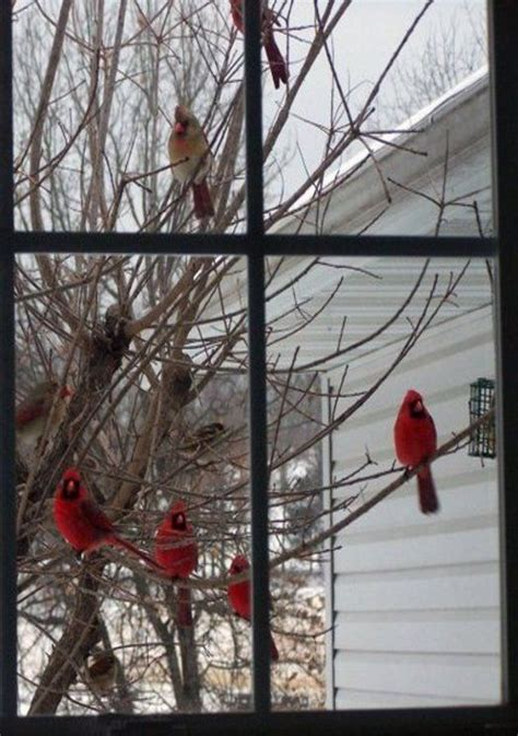 how to build a cardinal bird feeder woodworking projects