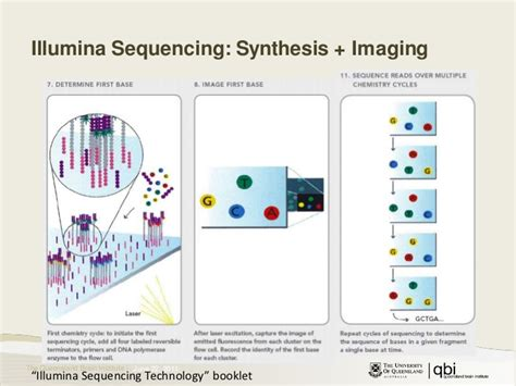 illumina sequence illumina sequencing tutorial images