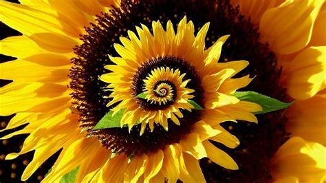 patterns in nature youtube decoding the secret patterns of nature fibonacci ratio
