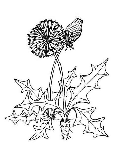 fiori da copiare fiori da copiare az colorare