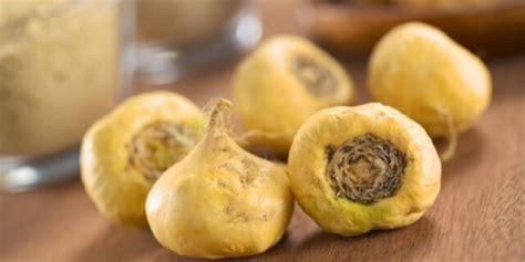 buah maca  manfaatnya jagapaticom