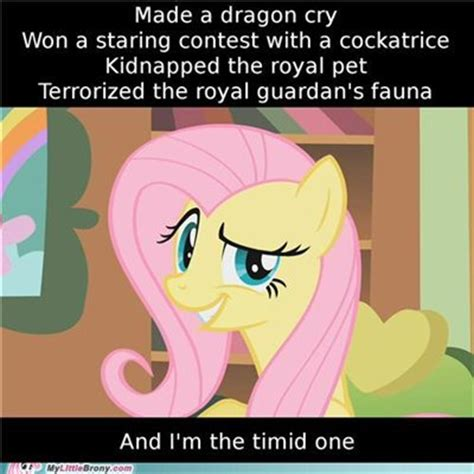 Memes My Little Pony - memes my little pony friendship is magic photo 35572161