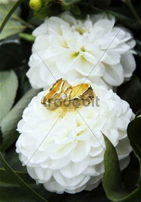 Goldene Eheringe by Goldene Eheringe Auf Blumen Runterladen Natur