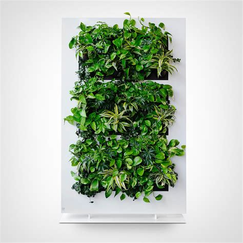 wall plant plant walls and live wall eco green office plants