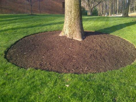 pacciamatura giardino la pacciamatura tecniche di giardinaggio cos 232 e a