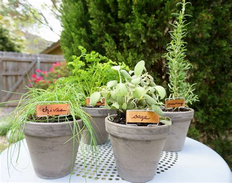 diy herb garden an easy tabletop diy herb garden