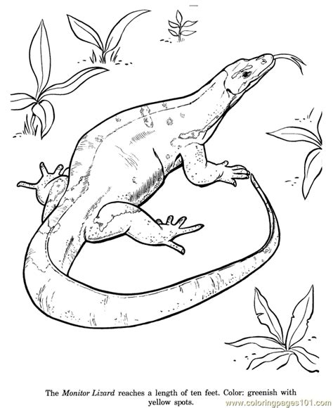 printable reptile images reptile coloring pages to print coloring pages