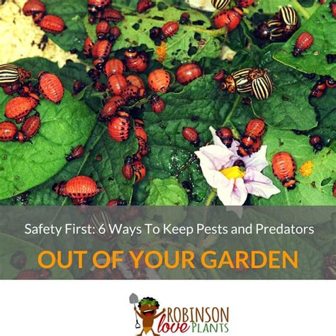 how to keep pests away from garden safety 6 ways to keep pests and predators out of