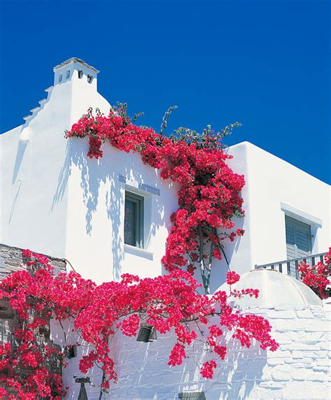 home flowers floral flowers greece home house photography image