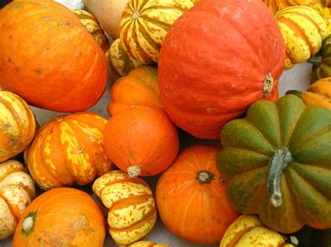 how to grow winter squash growing and harvesting winter