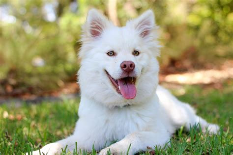 puppy photo free stock photo of adorable animal breed