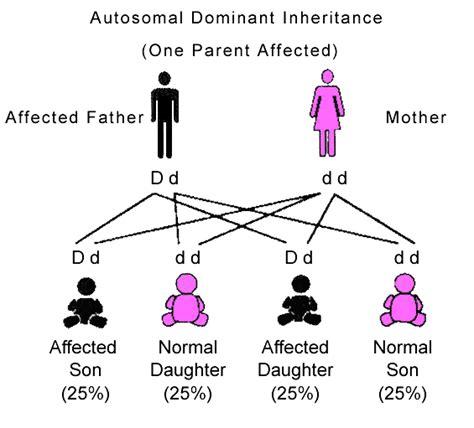 pattern of inheritance autosomal dominant inheritance pattern quotes