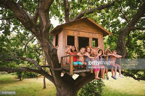tree house stock   pictures getty images