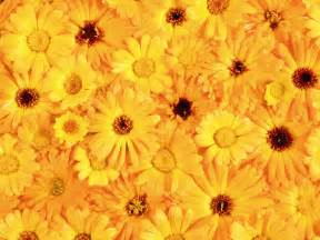 yellow flowers texture flowers flower background