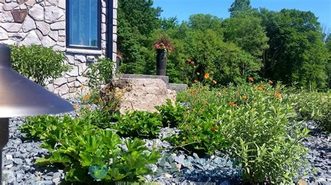Landscape Kalamazoo The 6 Best Plants For Your Sustainable Landscape In