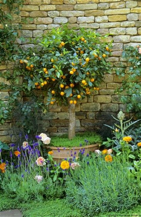 backyard lemon tree the herbalists garden orange tree in pot landscape