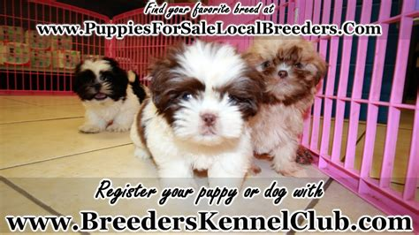 shih tzu puppies  sale  knoxville county