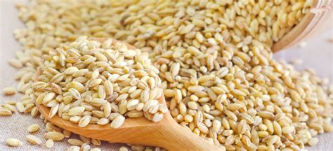 whole grains dr axe wheat berries top 6 benefits of wheat berry nutrition