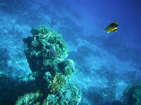 fuji underwater underwater cameras test 2010 fujifilm finepix xp10