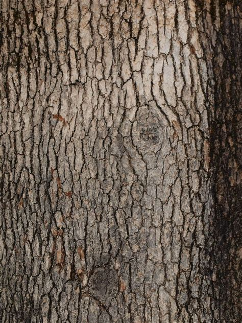 tree bark texture freebies textures pinterest tree