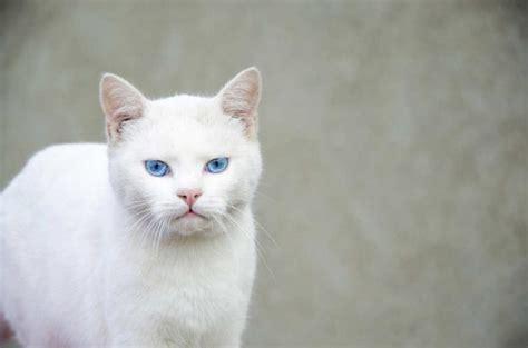 imagenes de niños jugando al gato y al raton seg 250 n los cient 237 ficos as 237 es como te ven y piensan los