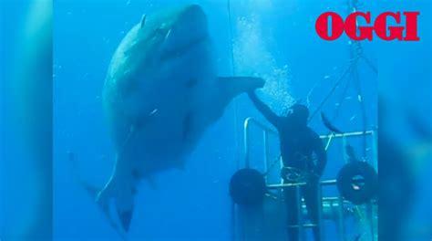 gabbia squali squali