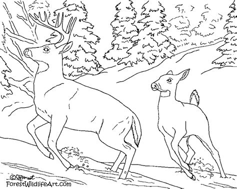 paint with water coloring pages forest wildlife art learn wildlife for kids color book fun