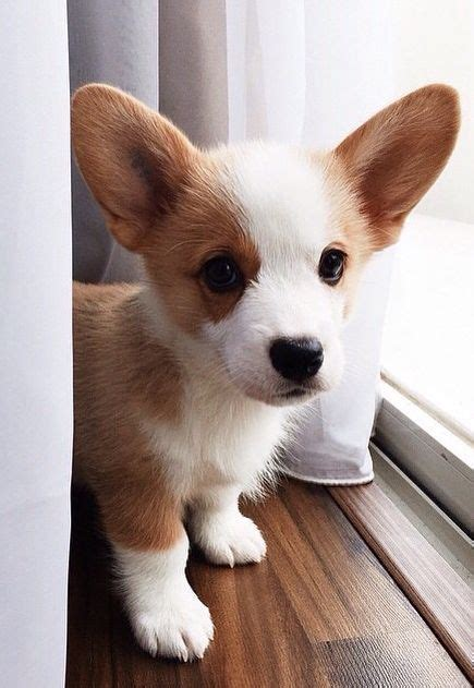cute dog pictures   day  precious pups