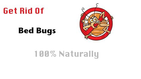 hot to get rid of bed bugs how to get rid of bed bugs 100 naturally youtube