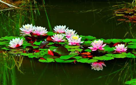 the of the lotus present moment organizing of san