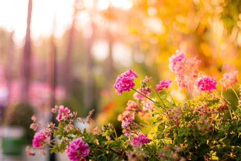 The Photos free stock photo of bloom blossom floral