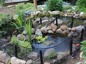 backyard turtle pond turtle ponds quotes