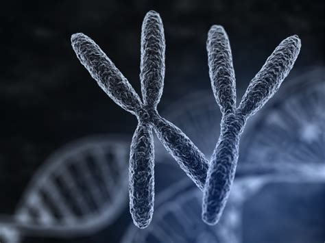 The science of sexual orientation: The latest on genes ... Y Chromosome