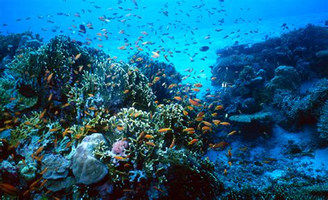 into the blue underwater sounds of nature for relaxation underwater photography photostockplus