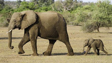 191 que comen los animales vertebrados 191 de que se alimentan animales y animales los elefantes 191 cu 225 ntos