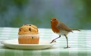 experts say that birds need to be fed cake cheese and