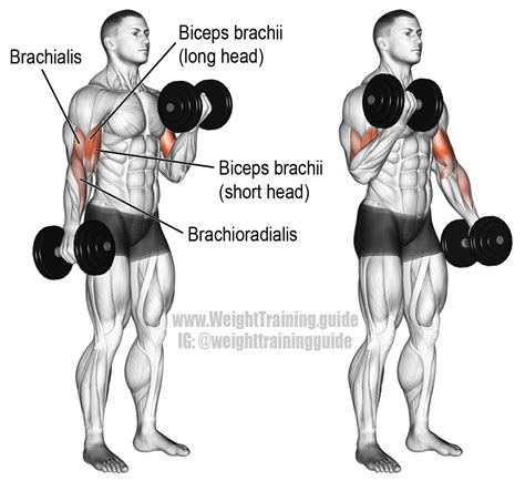 dumbbell curl exercise and weight