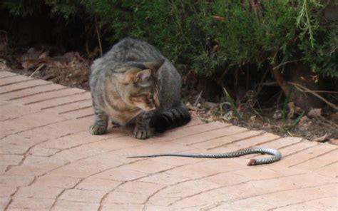 schlangen im garten katze f 228 ngt schlange im garten