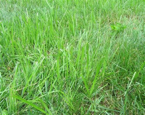 Killing Grass by Best 25 Grass Weeds Ideas On Killing Weeds