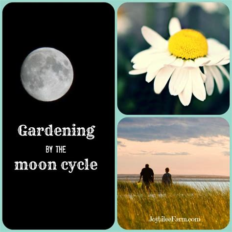 Gardening By The Moon by 10 Gardening Secrets That Timers Gardening By