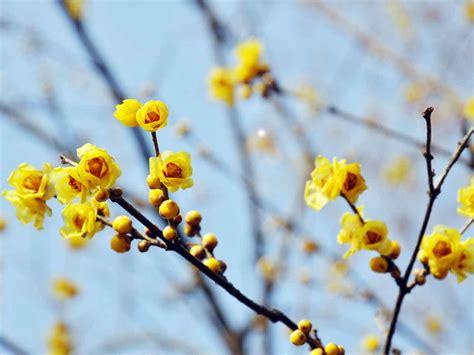 flowering garden plants winter flowering scented plants saga