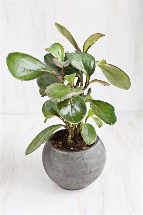 good houseplants for low light 20 best ideas about indoor house plants on pinterest