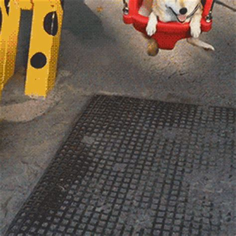 swing animated gif funny animal gifs part 216 10 gifs amazing creatures