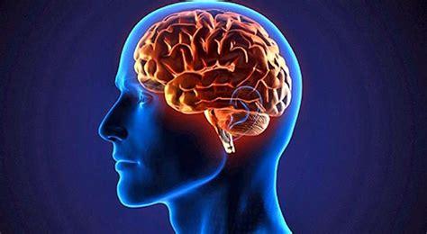 cerebro de pan la el incre 237 ble hallazgo de 97 zonas que no se conoc 237 an del