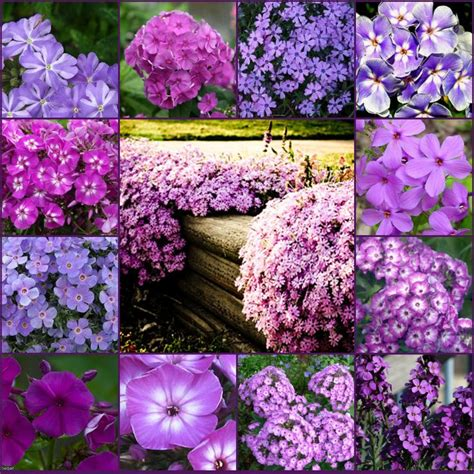 names of purple 17 best ideas about purple flower names on pinterest