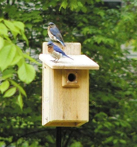 bird houses with viewing window birds choice ultimate bluebird house w viewing window quality bluebird nest boxes at