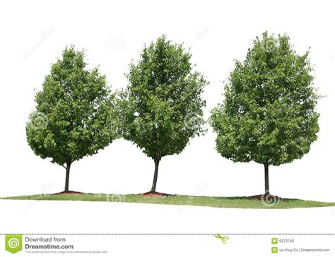 Buying House Plans three trees stock photography image 6272742