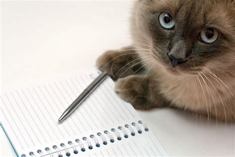 Cat Essay Writer by How To Keep Writing