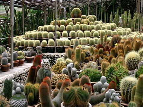 Jual Sekam Bakar Makassar cactus valley cameron highlands mingguan wanita