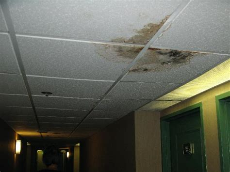 Mold On Ceiling Tiles by S After An Hour On Rug Picture Of Lancaster